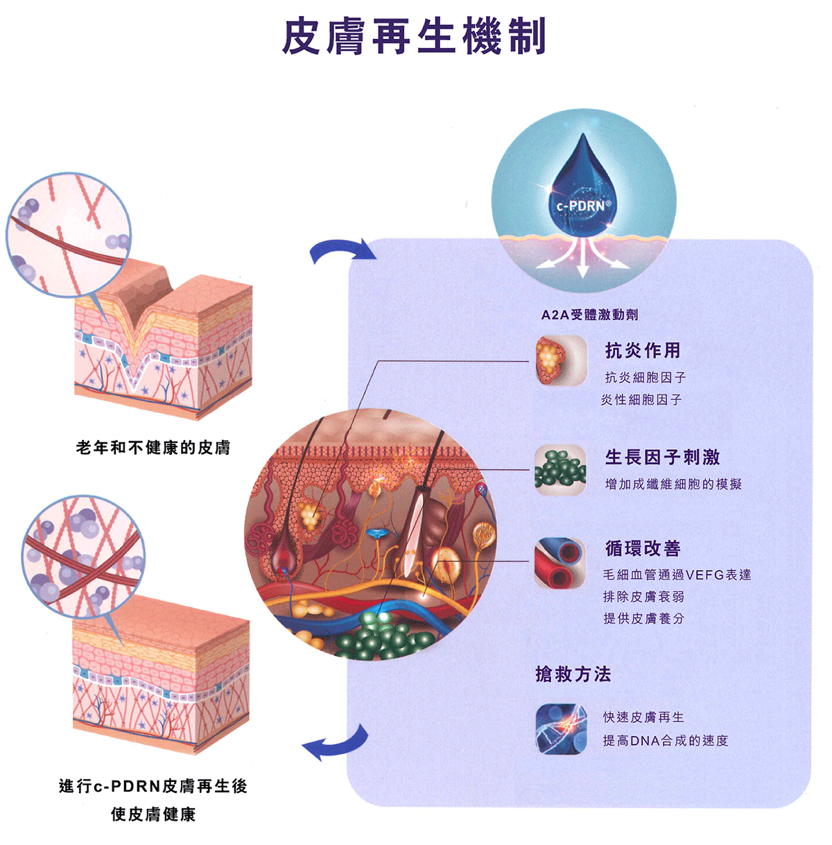 NuMe-Sales-Kit-D-Cell-PDRN-BB-肌逆齡療程-01C.png